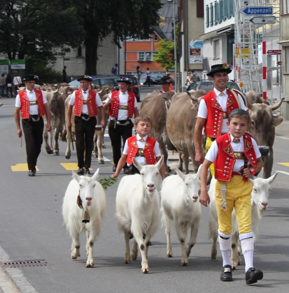 Alpabfahrt mit Geiss und Kuh