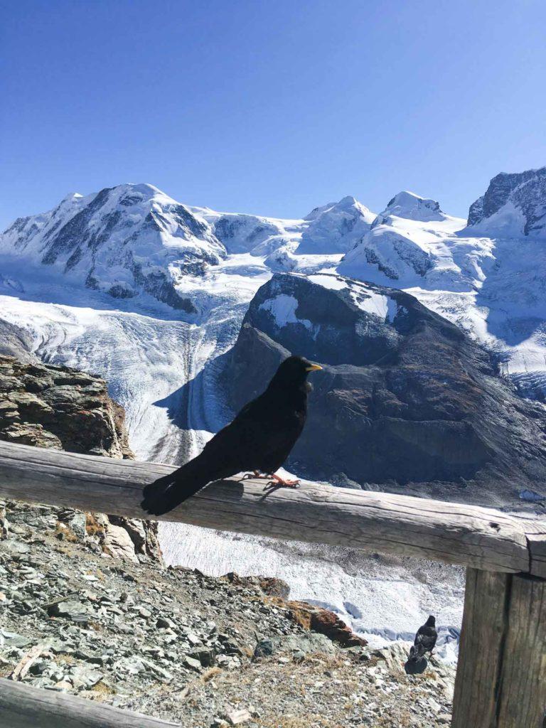 Zermatt-8573